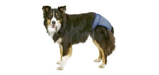 Culotte chien