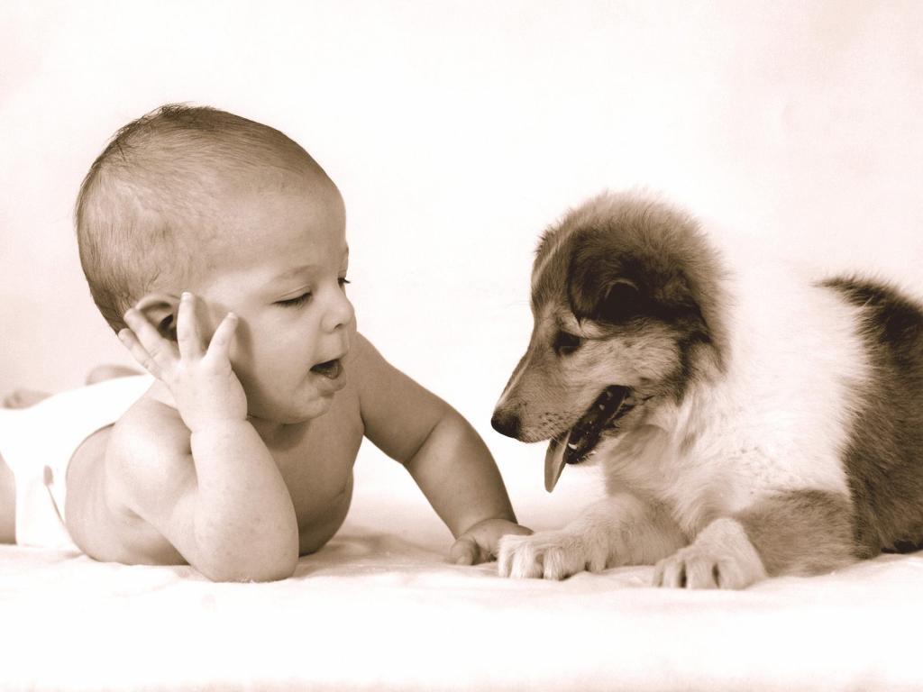 B b et chien l 39 arriv e d 39 un b b avec un chien les chiens - Image bebe chien ...
