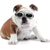 astuce les-chiens.com