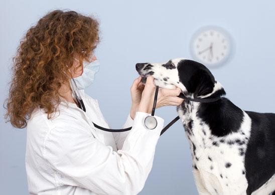 vétérinaire chien malade