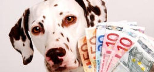 budget alimentation chien