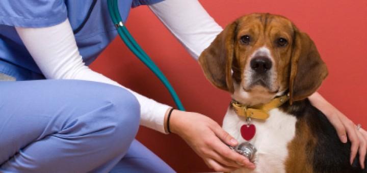 Dépense santé des chiens