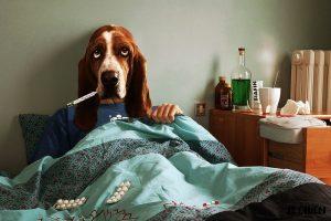 tremblement-chien