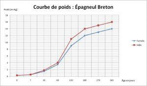 courbe poids épagneul breton